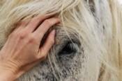 Equitazione per disabili: perché gli animali ci fanno bene