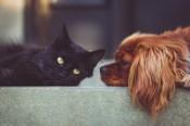 Benefici degli animali da compagnia per le persone anziane